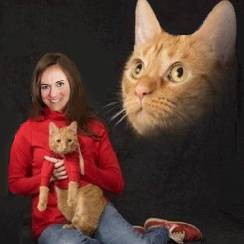 cat-resized